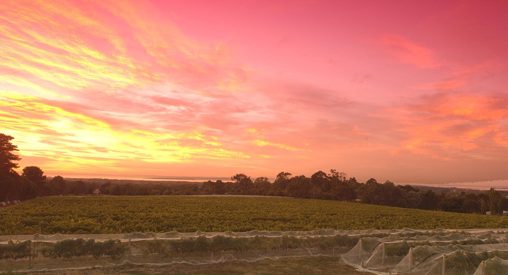 mornington-peninsula-winery-moorooduc-vic